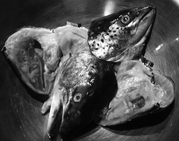Salmon heads from the fishmonger